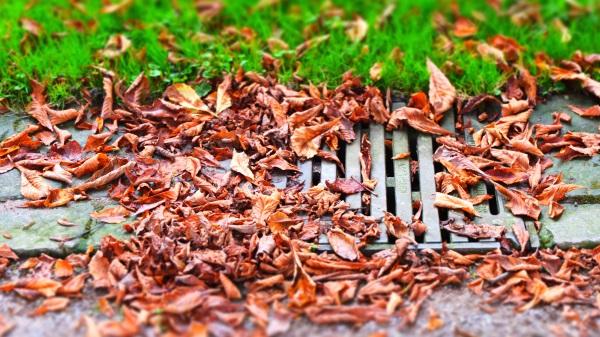 leaves blocking a drain
